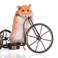 Hamster on a bicycle